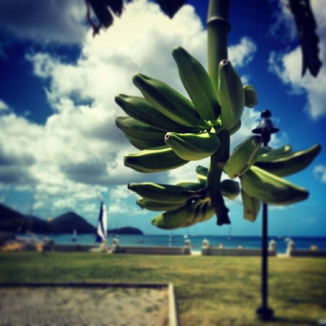 st lucia3
